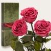 Три долгосвежие розы Florich Розовый коралл