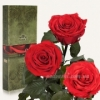 Три долгосвежие розы Florich Красный рубин