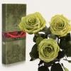 Три долгосвежих розы Florich Лаймовый нефрит