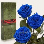 Три долгосвежие розы Florich Синий сапфир
