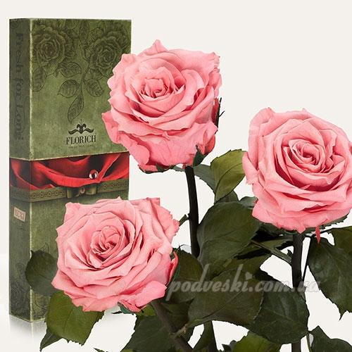 подарок цветы девушке розы долгосвежие