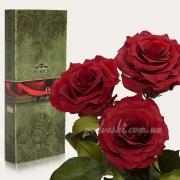 Три долгосвежие розы Florich Багровый гранат