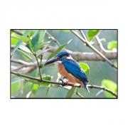 Картина-светильник Цветная птичка