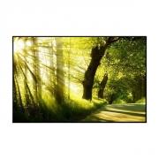 Картина-светильник Солнце в лесу