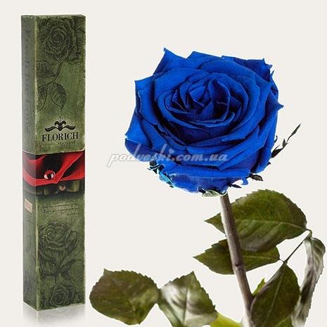 роза подарок купить долгоцветущую розу